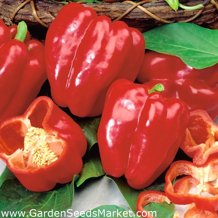 kaalulangus kuuma paprika